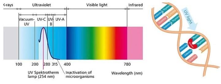 اشعه ماوراء بنفش (UV)